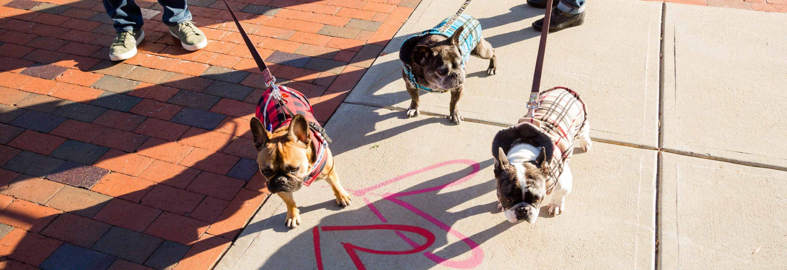Dogs on a leash on the sidewalk