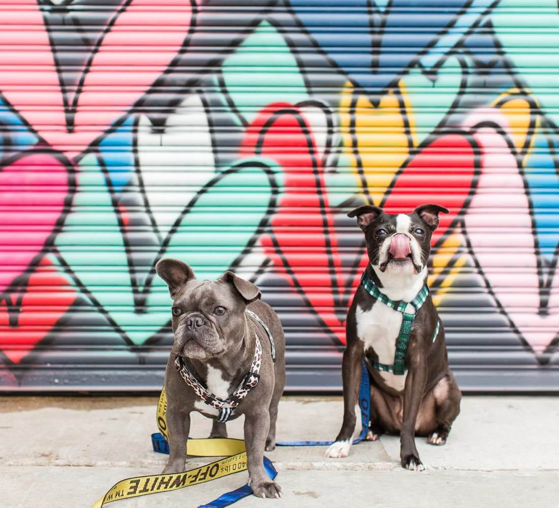 Two dogs in front of a mural.
